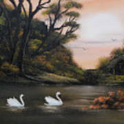 Swans At Dusk.for Sale Poster