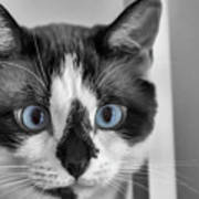 Sweet Blue Eyes Poster