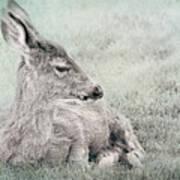 Sweet Young Deer Poster