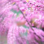 Swirls Of Spring Poster