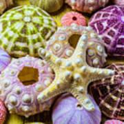 Syarfish And Sea Urchins Poster