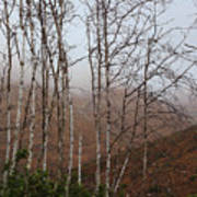 Sycamore Canyon Trail In Rain Poster