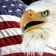 Symbol Of America Poster by Teresa Zieba