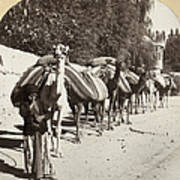 Syria: Caravan, C1900 Poster