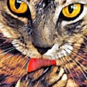 Tabby Cat Licking Paw Poster