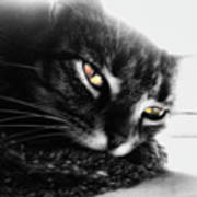 Tabby Cat Selective Color Poster