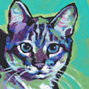 Tabby Chic Poster