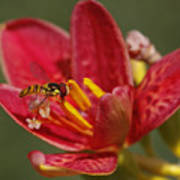 Table For One Poster