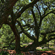Table Under The Oak Tree Poster