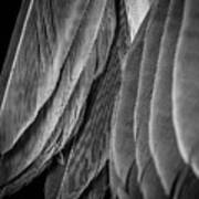 Tail Feathers Abstract Poster