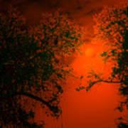 Talking Trees Of Night Poster