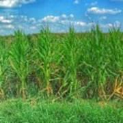 Tall Corn Poster