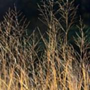 Tall Fall Grasses Poster