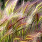 Tall Grass Poster by Marty Koch