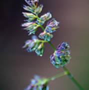 Tall Grass Stem Close-up Poster