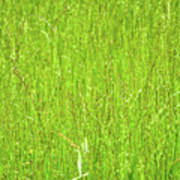 Tall Grassy Meadow Poster