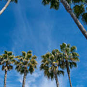 Tall Palms Meet The Sky Poster