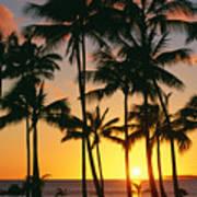 Tall Sunset Palms Poster