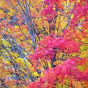 Tangerine Tree Poster
