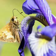 Tan_moth Poster