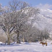Taos January 2008 Poster