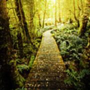 Tarkine Tasmania Trails Poster
