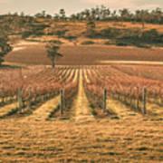 Tasmanian Winery In Winter Poster