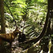 Tasmanian Wolf In Forest Poster by Christian Darkin