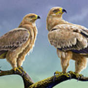 Tawny Eagles Poster