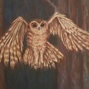 Tawny Owl In Flight Poster