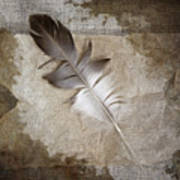 Tea Feather Poster