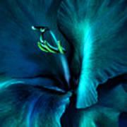 Teal Gladiola Flower Poster