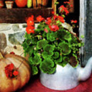 Teapot Filled With Geraniums Poster