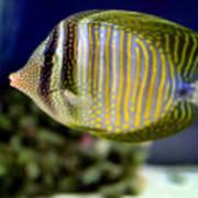 Technicolor Fish Poster