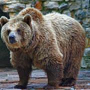 Teddy Bear Alive Poster