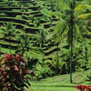 Tegalalang, Bali Poster