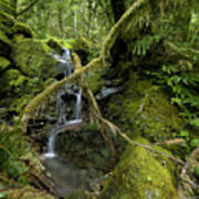 Temperate Rain Forest Waterfall Poster