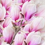 Tender Magnolia Flowers Poster