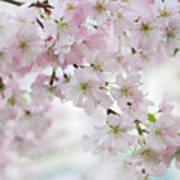 Tender Spring Pastels Poster