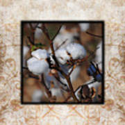 Tennessee Cotton II Photo Square Poster