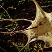 Tent Caterpillars In Rural Ontario Poster