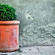 Terracotta Flower Pot On Sidewalk Poster