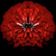 Test Red Abstract Flower 3 Poster