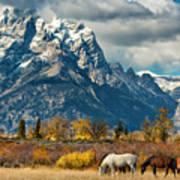 Teton Horses Poster