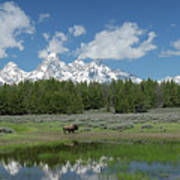 Teton Reflection With Buffalo Poster