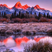 Teton Reflections In The Frosted Willows Poster