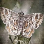 Texas Covered Skipper Poster
