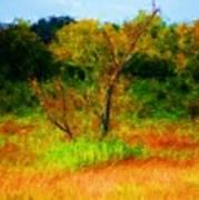 Texas Landscape 102310 Poster