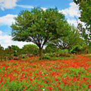 Texas Poppy Field 159 Poster