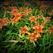 Texture Drama Field Of Tiger Lilies Poster